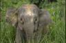 Female elephant rampages through school compound in Gerik