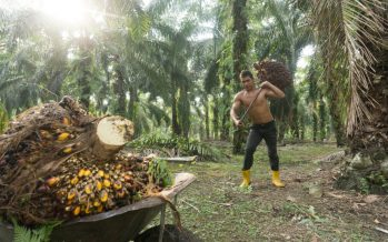 MPOB expects palm oil stocks to fall 1.5 – 2m tonnes