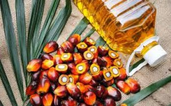 Malaysia's palm oil stocks fall 4.08% in Nov 2019