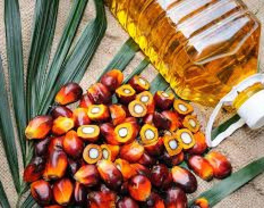 Malaysia's palm oil stocks fall 4.08% in Nov 2019