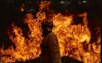 Australia's NSW declares state of emergency for bushfires