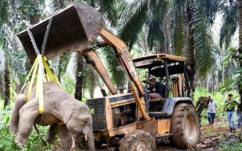 Sabah threatened by critical wildlife extinction