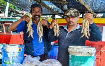 It's raining shrimps in Tok Bali, Bachok