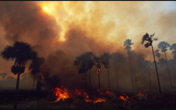 Malaysia should help Australia to stem the bushfire crisis