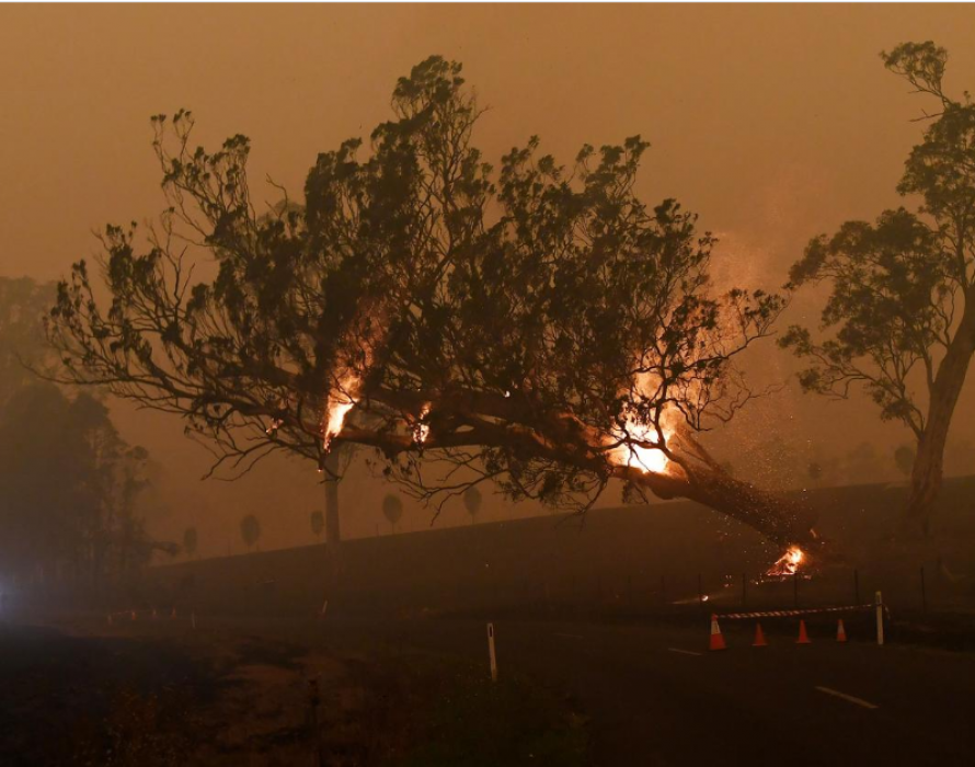 Bushfires: Australia yet to respond to help offer – DPM