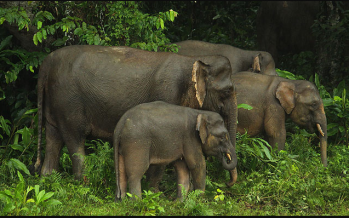 Special lamps to keep off wild elephants in Gua Musang