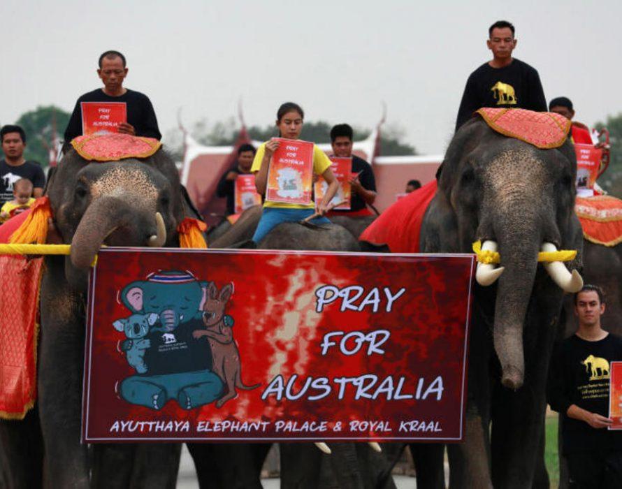 Thai elephants march in silence for Australian bushfires