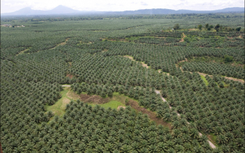 'US-China deal could hurt Malaysia palm oil exports to China'