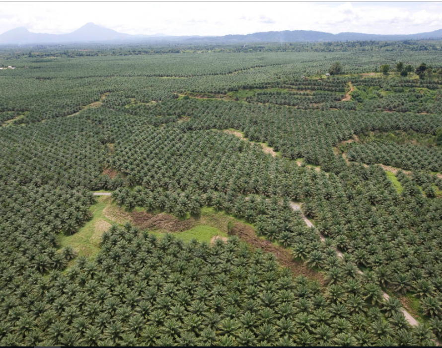 Oil palm product exports rose 12 pct in 2019