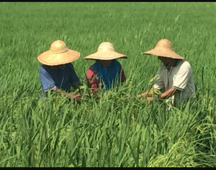 Digital farming set to alter nation's agricultural landscape