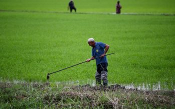 Agriculture Dept aims to have 500 contract growers this year