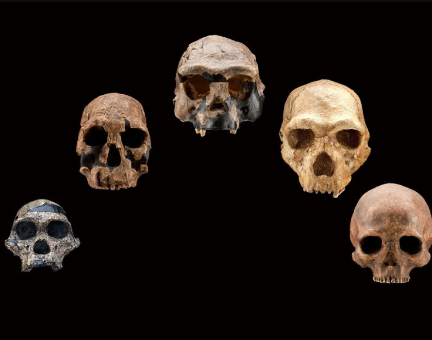 Mysterious 'ghost population' of ancient humans discovered