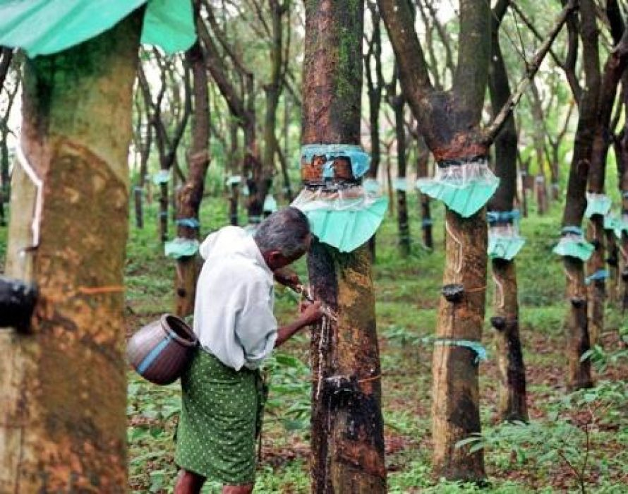 Rubber production incentive activated for January 2020