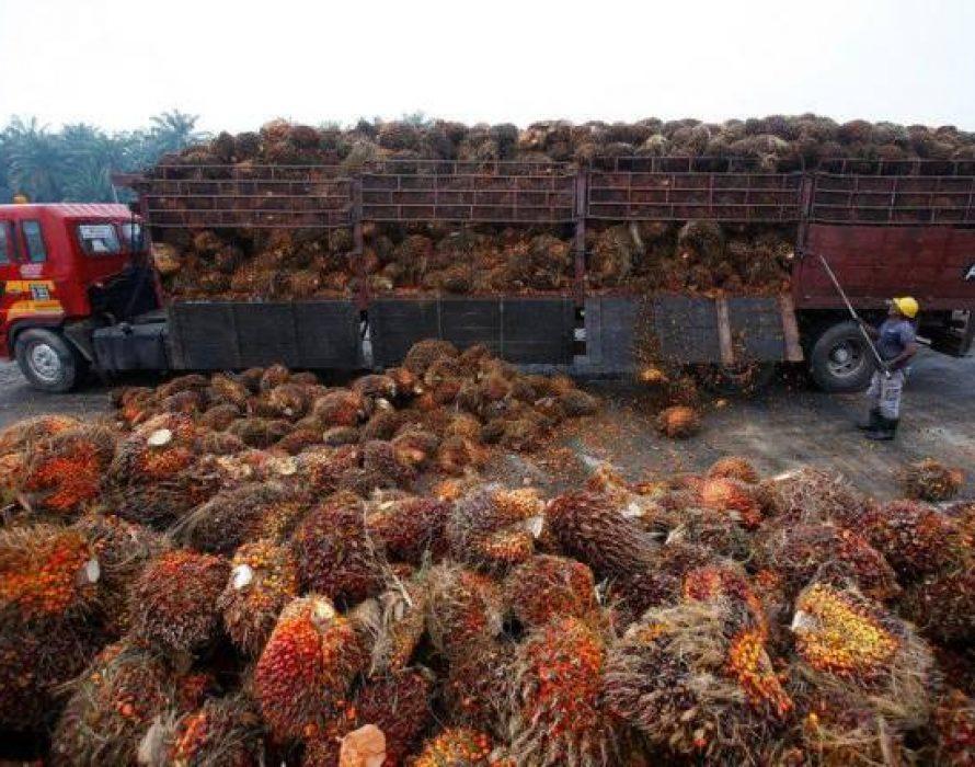 Malaysia's palm oil stocks drop 12.69% in Jan 2020