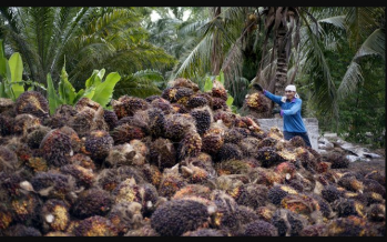 India's halt on Malaysian palm imports stir up edible oil trade