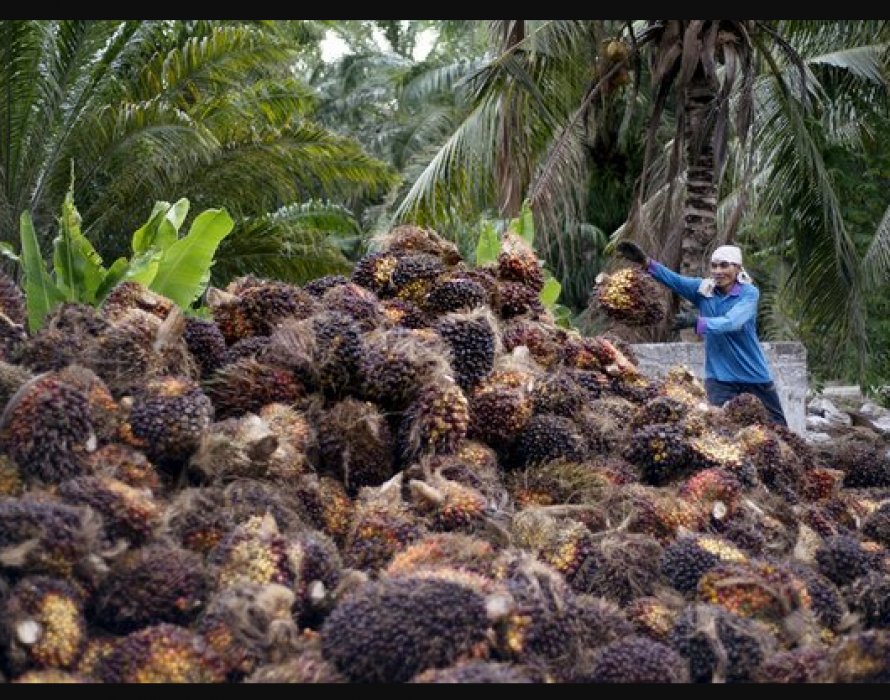 India's halt on Malaysian palm imports stir up edible oil trade