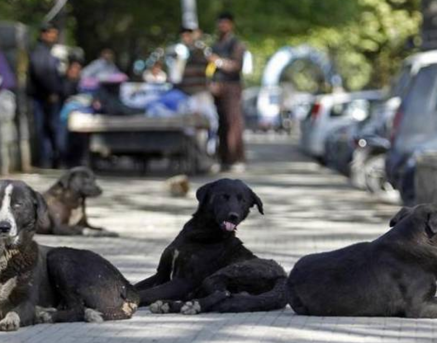 Sibu: 18 stray dogs caught to prevent spread of rabies