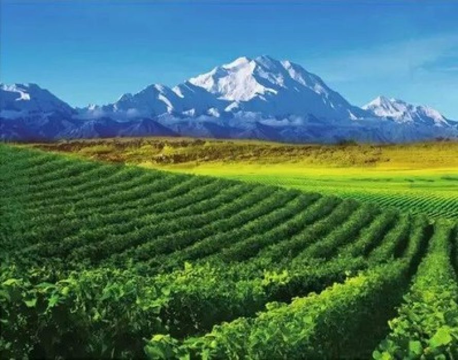 Ningxia, a rising star of world's wine map