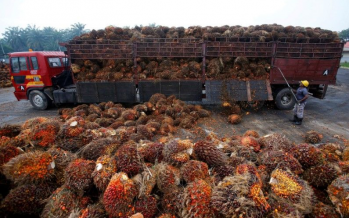 India's palm oil imports from M'sia have turned negligible