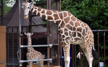 MCO: Melaka zoo creates special fund for food supplies