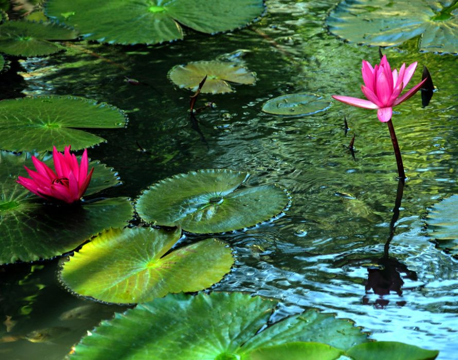 CMCO: 38 individuals detained for gathering to snap lotus flower scenery