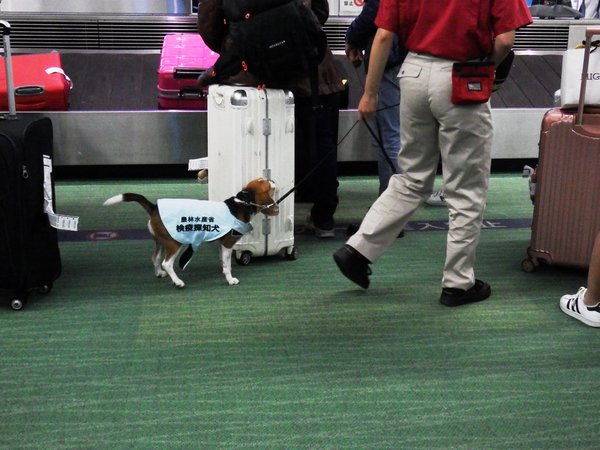 Dogs trained to detect passengers' hand-luggage