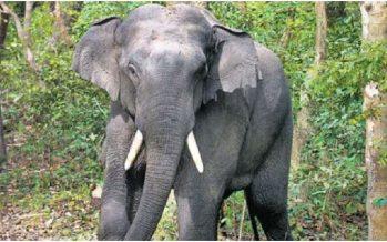 Security guard killed in Kota Tinggi elephant attack