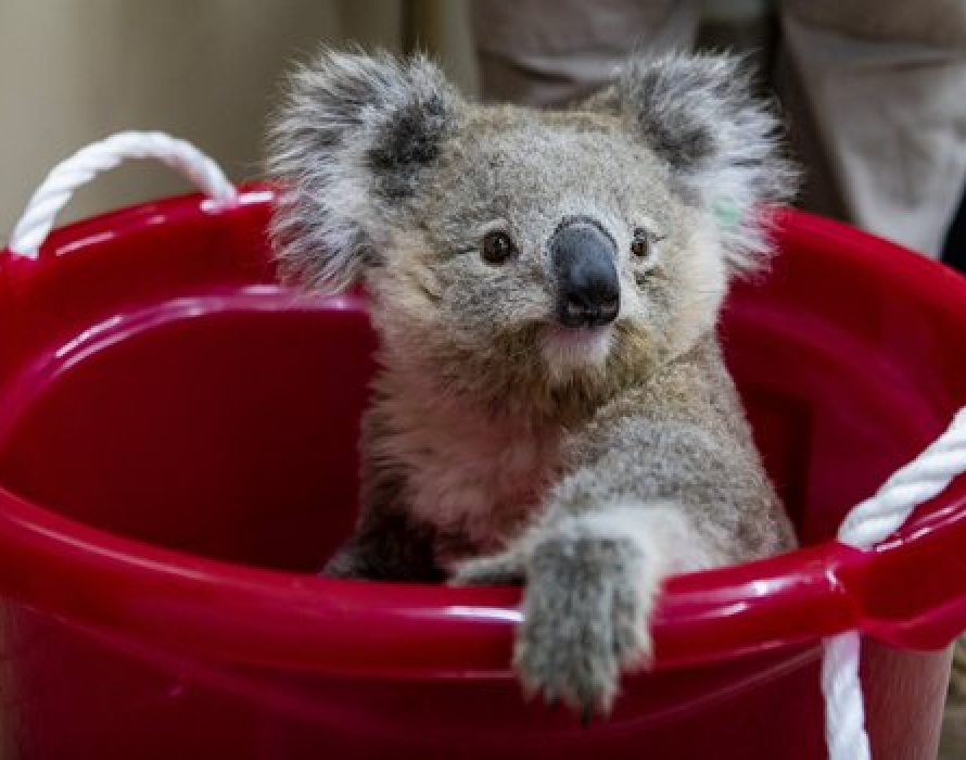 Citi invests in a sustainable future as Principal Sponsor of Taronga Conservation Society