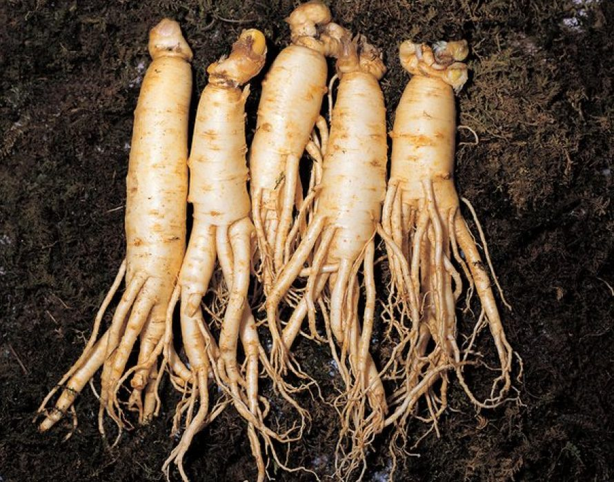 The Korea Ginseng Association announces positive effects of Korean ginseng on respiratory infections