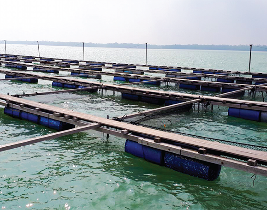 Aquaculture company invests RM2 mln in Langkawi Cage Culture