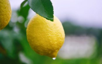 56 Million Dollar Turnover: the Second World Lemon Industry Development Conference Kicks off in Anyue, China