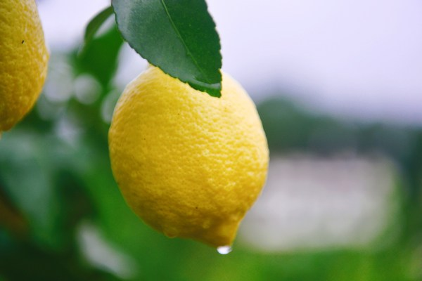 Anyue lemon