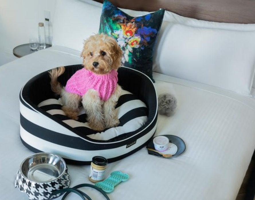 Little Albion Boutique Hotel Launches the Ultimate Uber-Luxe Doggie Staycation Package