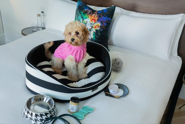 Plush Pup Package at Little Albion, a Crystalbrook Collection Boutique Hotel