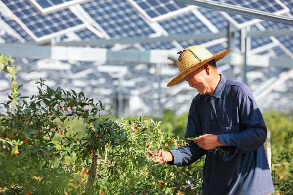 Employee at the Baofeng Farm