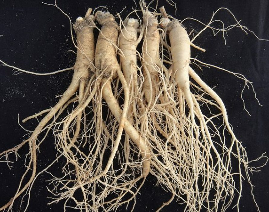 The Korea Ginseng Association, announces new direction for Korean ginseng, a publicly listed functional ingredient for bone health