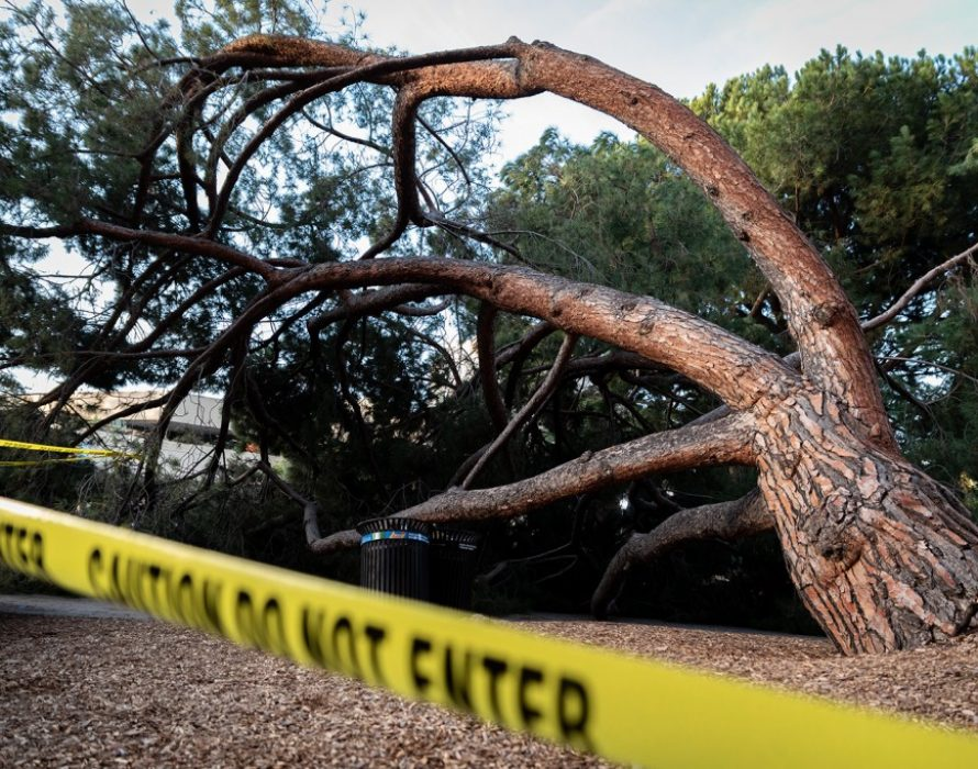 Security guard crushed to death by falling tree