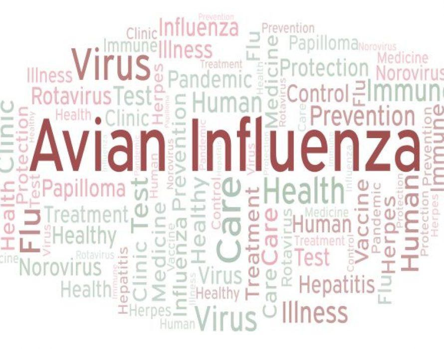 S. Korea ups disinfection operations at wild bird habitats on Avian influenza