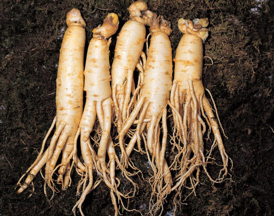 The Korea Ginseng Association to introduce the increasing status of Korean ginseng in the world