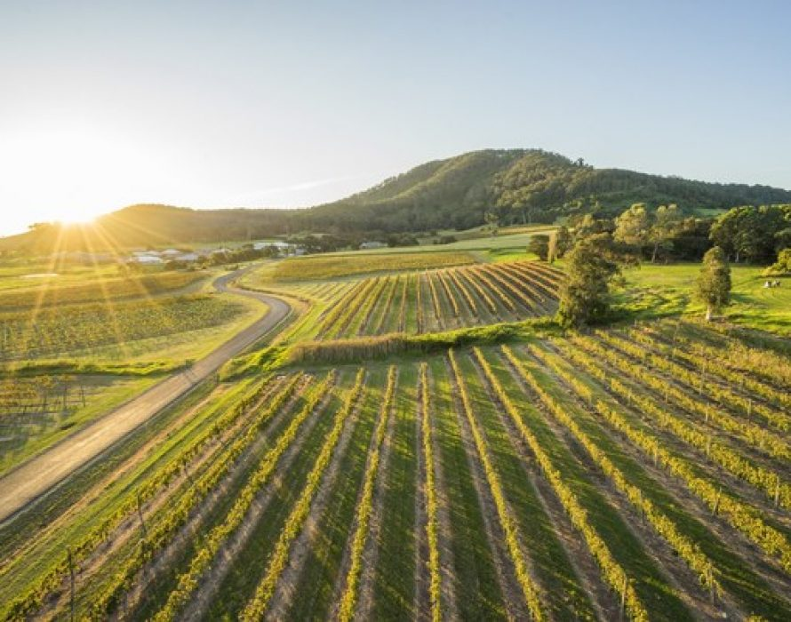 Destination New South Wales – Shoalhaven: Vineyards by the ocean