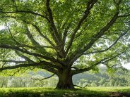 Tree care, management in urban areas needs involvement of all parties