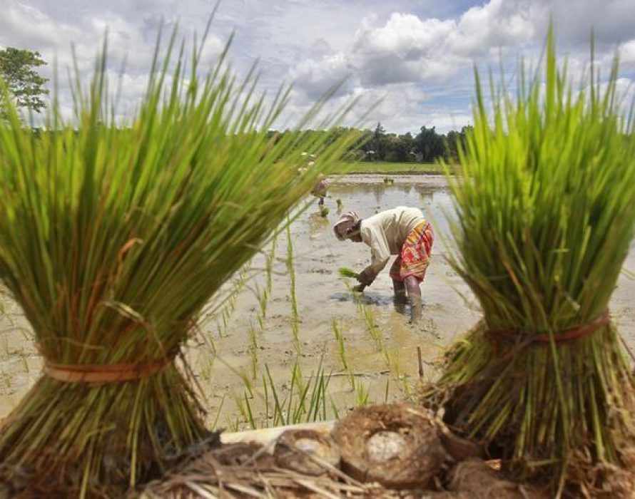 Vietnam buys Indian rice for first time in decades
