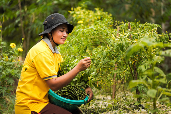 Sinar Mas Agribusiness and Food has collaborated with several partners, including Wagenigen University, The Netherlands, to implement the Alternative Livelihood Program through Integrated Ecological Farming.