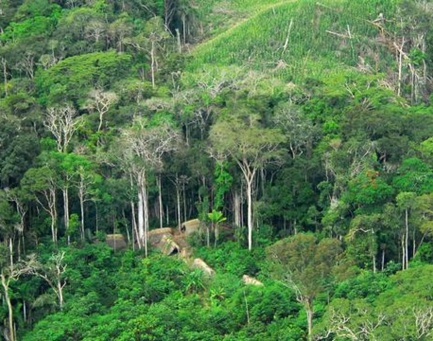 Degazetting a forest reserve 'can take years'