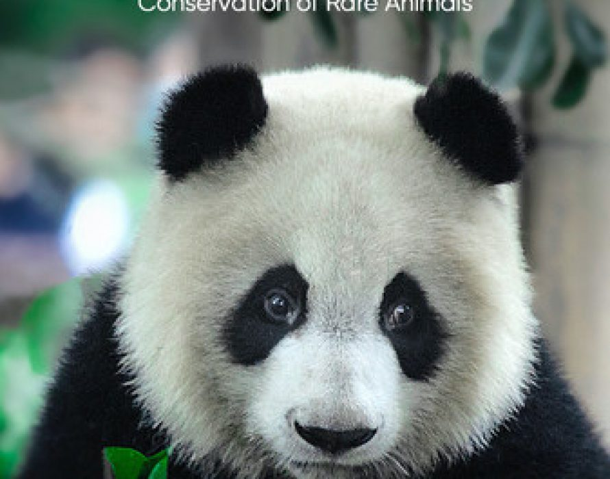 Facilitating the Research of Giant Panda Breeding, HungryPanda Courageously Takes Social Responsibility