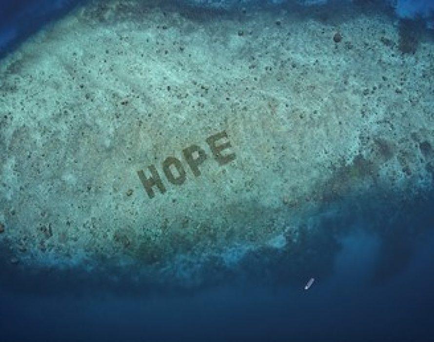 SHEBA® unveils Hope Reef: World's Largest Coral Restoration Program Announced