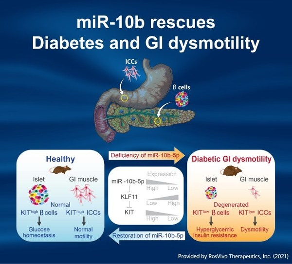 miR-10-5p performs as a key factor in GI dysmotility and Diabetes via the KLF11-KIT pathway
