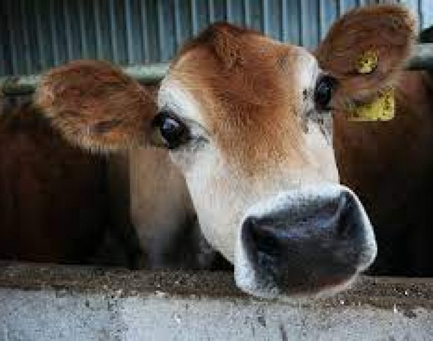 Perak JPV denies issuing statement prohibiting people from buying beef