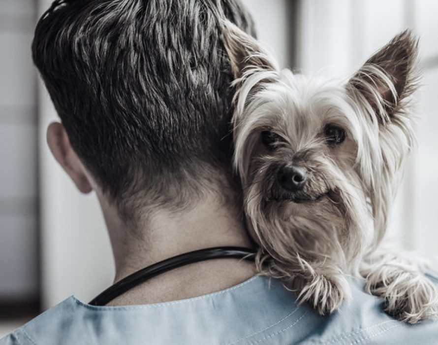 New Cancer Treatment For Australian Dogs With APVMA Approval Of Qbiotics' Stelfonta®