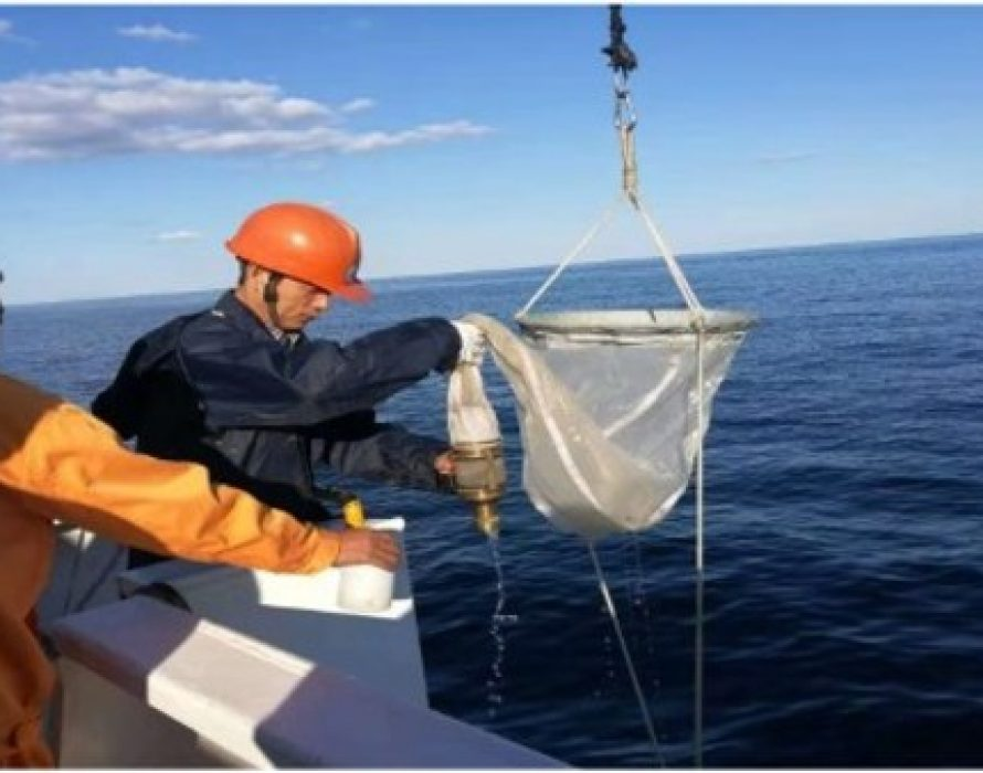 China Oceanic Development Foundation: The Yellow Sea Stays Stable and Well – Results of the Environmental Cooperative Research between the Republic of Korea and China